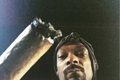 "First Week Sales Projections For Snoop Dogg's ""BUSH"""