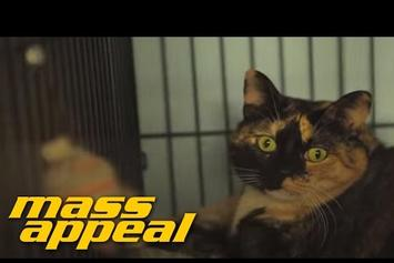 """El-P Attempts To Record Cat Sounds For """"Meow The Jewels"""""""